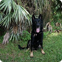 Adopt A Pet :: Billy - Pompano Beach, FL