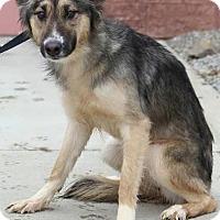 Adopt A Pet :: Mila - Zanesville, OH