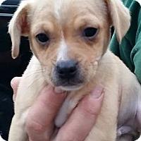 Adopt A Pet :: Thursday - Gainesville, FL