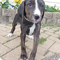 Adopt A Pet :: Sylvia - West Chicago, IL