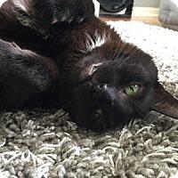 Adopt A Pet :: Claussen - Naperville, IL