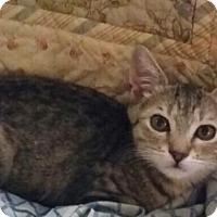 Adopt A Pet :: Hadley - Sarasota, FL