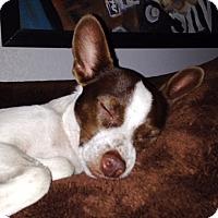 Adopt A Pet :: JACK - DeLand, FL