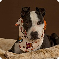 Adopt A Pet :: Maybelline - Flint, MI