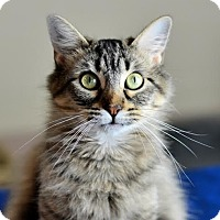 Adopt A Pet :: Gazelle - Columbia, IL