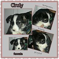 Adopt A Pet :: Cindy - Richmond, CA