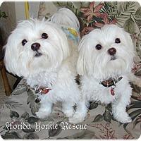 Adopt A Pet :: Snicker & Doodle - Palm City, FL