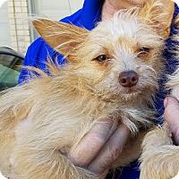 Adopt A Pet :: Hawkeye - Houston, TX