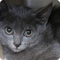 Adopt A Pet :: Aubrey - Lincoln, CA