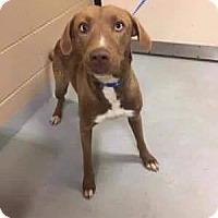 Adopt A Pet :: Blue Eyes - Hortense, GA