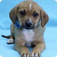 Adopt A Pet :: Saylor - Picayune, MS