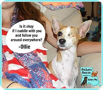 Chihuahua Dog for adoption in Greenwood, Louisiana - Ollie
