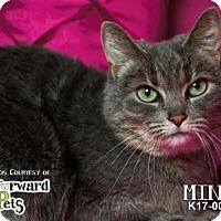 Adopt A Pet :: Mina - Akron, OH