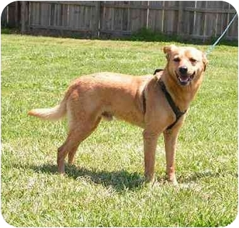 Terrier (Unknown Type, Medium) Mix Dog for adoption in Centerton, Arkansas - Dusty