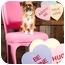 Photo 3 - Tibetan Spaniel/Chihuahua Mix Dog for adoption in Portland, Oregon - Starla