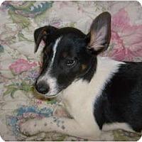 Adopt A Pet :: Daphne - Eden, NC