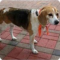 Adopt A Pet :: Molly Fae - Phoenix, AZ