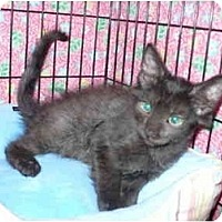 Adopt A Pet :: Blackjack - Colmar, PA
