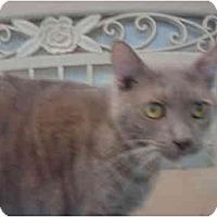 Adopt A Pet :: Rima - El Cajon, CA