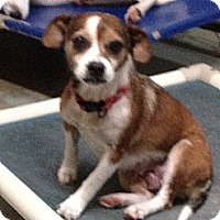 Adopt A Pet :: Ruby - Hohenwald, TN