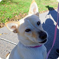 Adopt A Pet :: Naomi - Phoenix, AZ