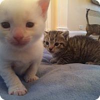 Adopt A Pet :: Tyler - Island Park, NY