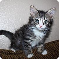 Adopt A Pet :: Waylon - Phoenix, AZ