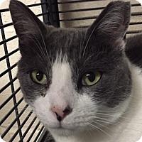 Adopt A Pet :: Greta - New Windsor, NY