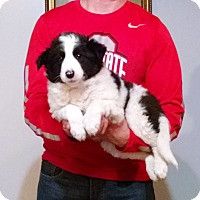 Adopt A Pet :: Jake - South Euclid, OH