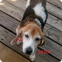 Adopt A Pet :: SARA - Ventnor City, NJ
