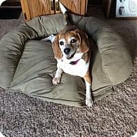 Adopt A Pet :: Maggie - cicero, NY