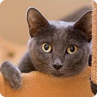 Adopt A Pet :: Pepper *Deformed Paw* - Scottsdale, AZ