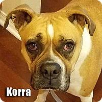Adopt A Pet :: Korra - Encino, CA