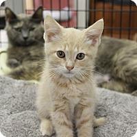 Adopt A Pet :: Curtis - Medina, OH