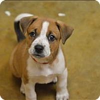Adopt A Pet :: Allie - Neosho, MO