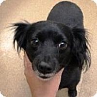 Adopt A Pet :: DD - Las Vegas, NV