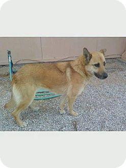 German Shepherd Dog Mix Dog for adoption in San Diego, California - Blondie