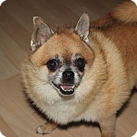 Adopt A Pet :: Buzzard - Las Vegas, NV