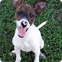 Adopt A Pet :: Cooper - Rowayton, CT