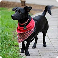 Adopt A Pet :: Coal - Santa Rosa, CA