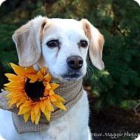 Adopt A Pet :: JLo - Hazel Park, MI