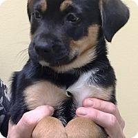 Adopt A Pet :: I'M ADOPTED Trixi Fallon - Oswego, IL