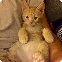 Adopt A Pet :: Hercules - Woodland Hills, CA