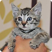 Adopt A Pet :: Aladdin - Agoura Hills, CA