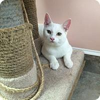 Adopt A Pet :: Spunky - Lunenburg, MA