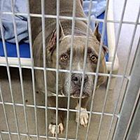 Adopt A Pet :: Merry - Peoria, AZ