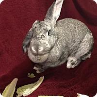 Adopt A Pet :: Delta - Columbus, OH