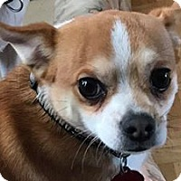 Adopt A Pet :: Theodore - Cool Ridge, WV