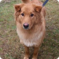 Adopt A Pet :: Ivy - Chester Springs, PA