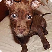 Adopt A Pet :: Reds - Reisterstown, MD
